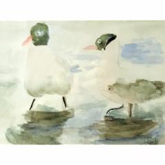 Setje van 6 vogels uit NL