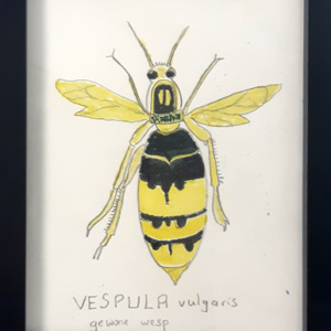 Schilderij Vesulpa  vulgaris