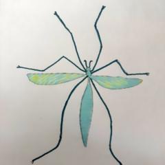 Schilderij Tipula paludosa